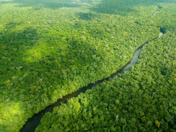 [Brazil Rainforest]