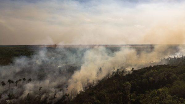 [Fire Cerrado Brazil]