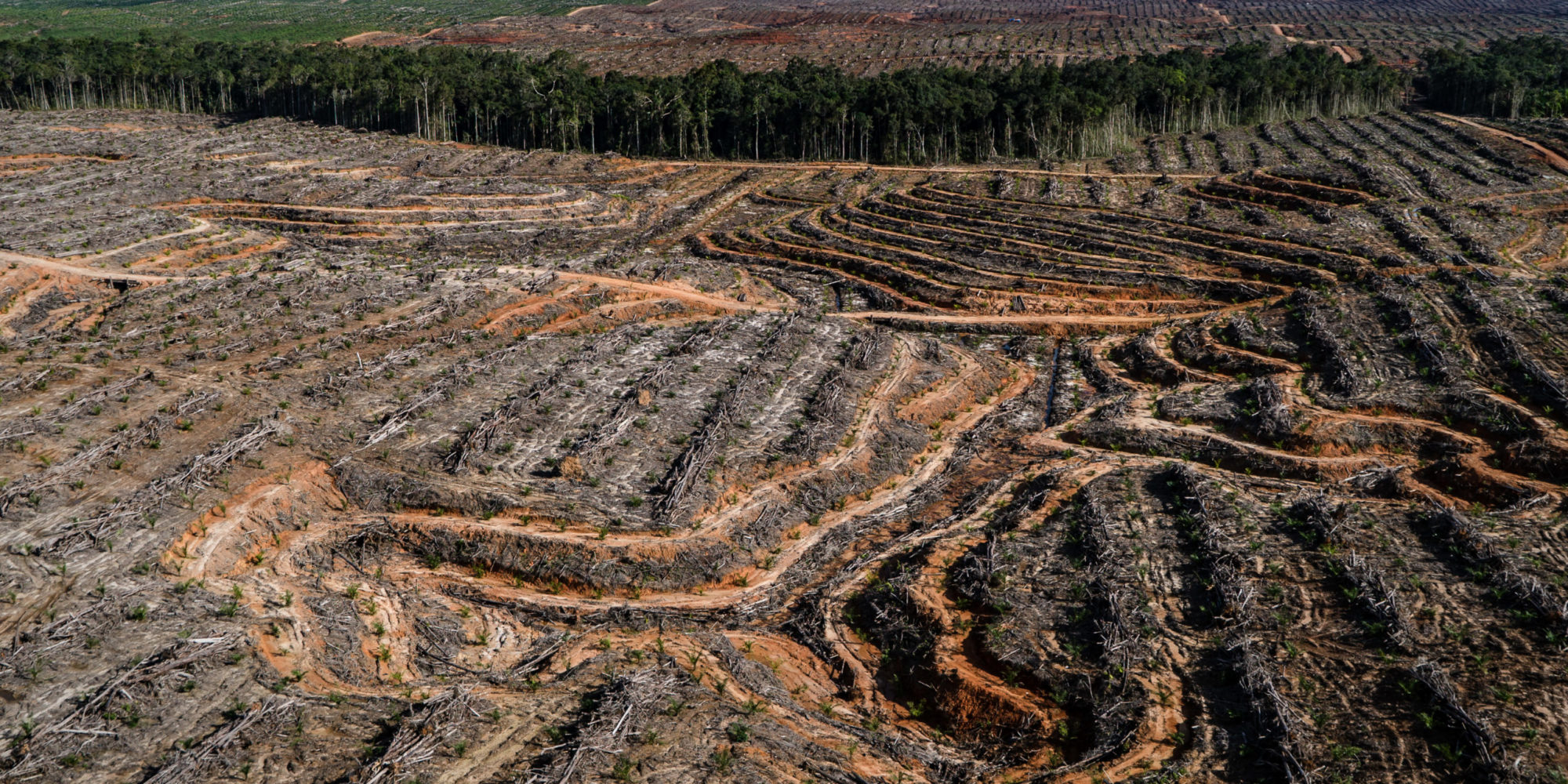 palm_oil_chinadialogue_creditsUletIfansastiGreenpeace